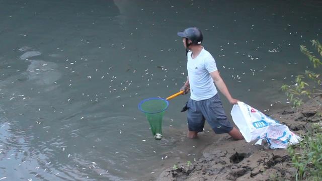 Nhiều người dân đứng chờ bắt những loại cá to, có nhiều con cá to từ 1 - 1,5 kg cũng nổi lên mặt nước lờ đờ rồi chết