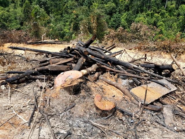 Đối tượng nghi phá rừng đã được mời lên làm việc. Vụ phá rừng này cũng sẽ được cơ quan chức năng khởi tố