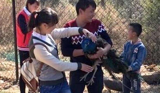 Ảnh chụp các du khách bắt một con chim công, ép chụp ảnh cùng và sau đó nhổ lông đuôi ở Vân Nam năm 2016.