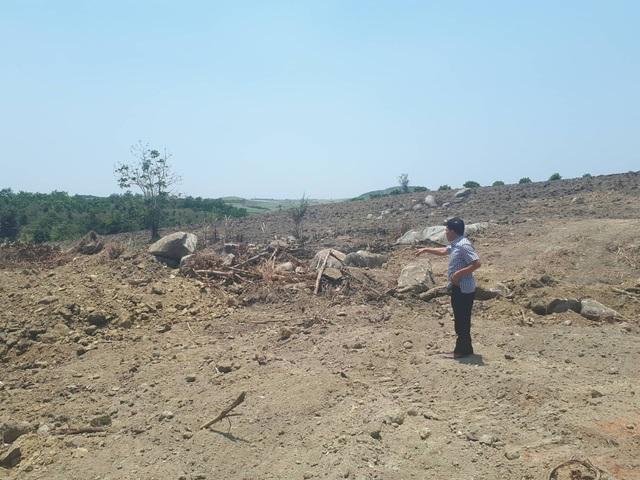Hiện trường khai thác cây đa sộp của ông Phạm Đình Thướng.