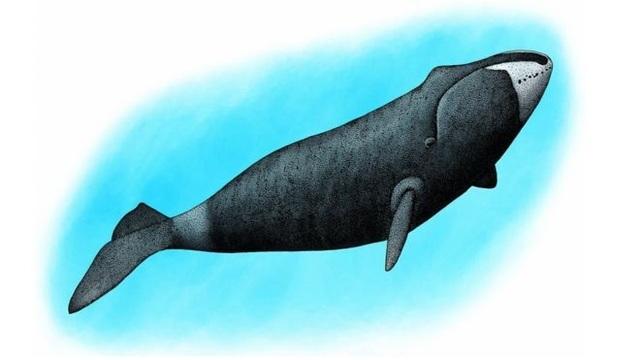 Loài cá voi thích hát trong bóng tối - 1