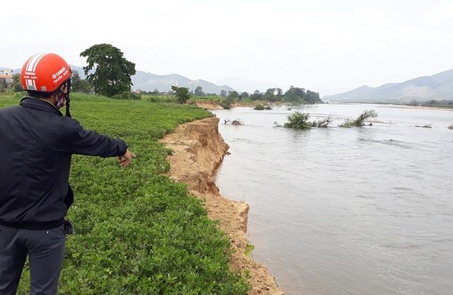 Tình trạng sạt lở đất canh tác, xâm thực do khai thác cát gây ra đang diễn ra nghiêm trọng ở khối Hòa Lạc, thị trấn Phú Phong (huyện Tây Sơn, Bình Định).