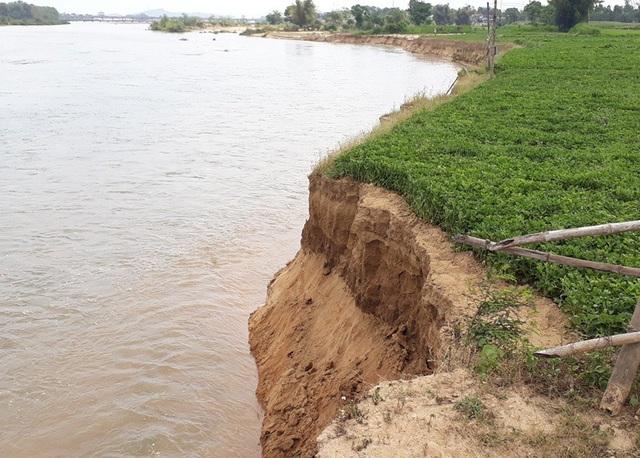 Nhiều chỗ sạt lở đất xuống sông còn rất mới.