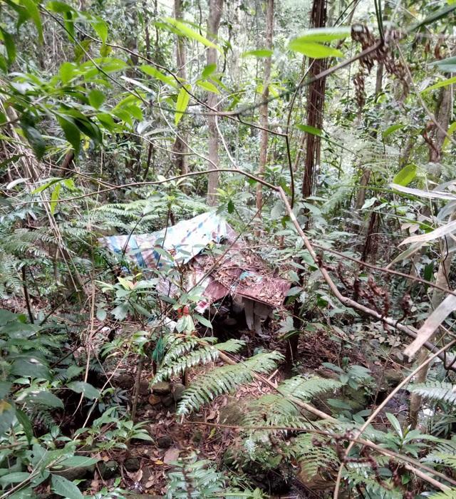 Đi hái lá cây, tá hoả phát hiện thi thể đang phân huỷ giữa rừng - 1