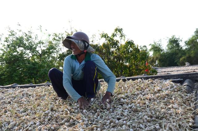 Vụ Đông Xuân 2017 - 2018, ông Trần Hữu Quảng trồng hơn 10 sào tỏi thu về gần 5 tấn tỏi tươi. Sau khi thu hoạch, ông Quảng đưa tỏi lên mái nhà để phơi