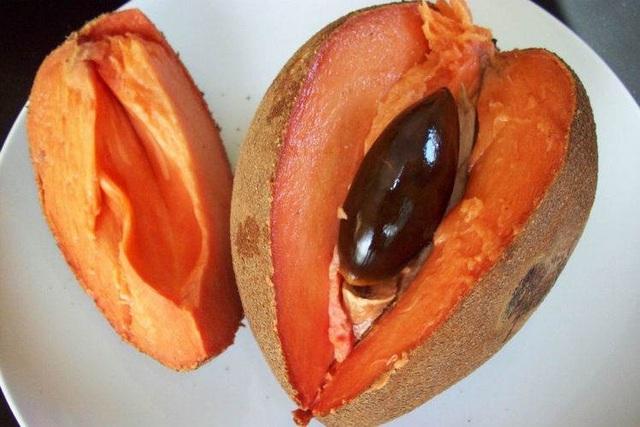 """Hồng xiêm ruột đỏ """"khổng lồ"""" 2kg/quả, giá gần triệu đồng/cây giống có gì đặc biệt? - 1"""