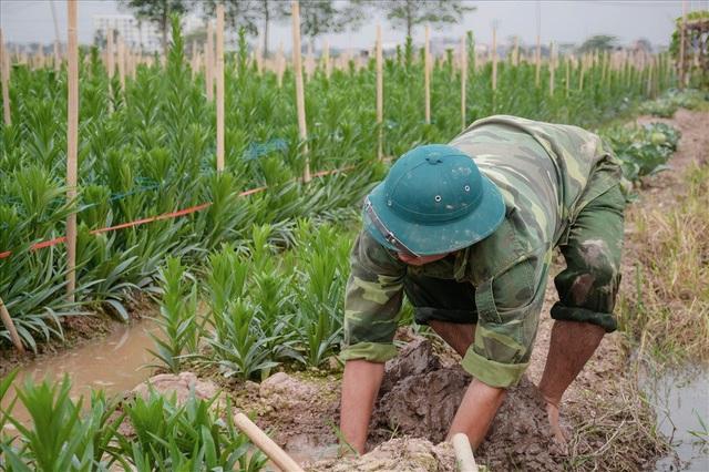Ruộng quá khô cằn, anh Phúc phải tháo nước vào ruộng cứu hoa.