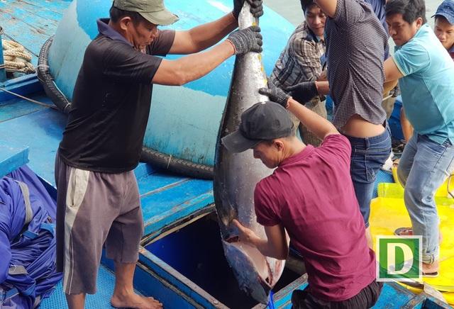 Theo các chuyên gia, công tác bảo quản hải sản hiện còn nhiều lạc hậu khiến tỷ lệ hao hụt đến 20-30%, dẫn đến hiệu quả kinh tế thấp