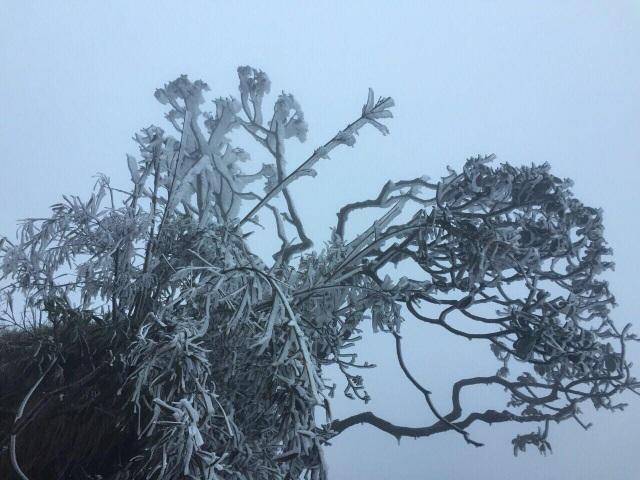 Băng tuyết bất ngờ phủ trắng đỉnh Fansipan - 6