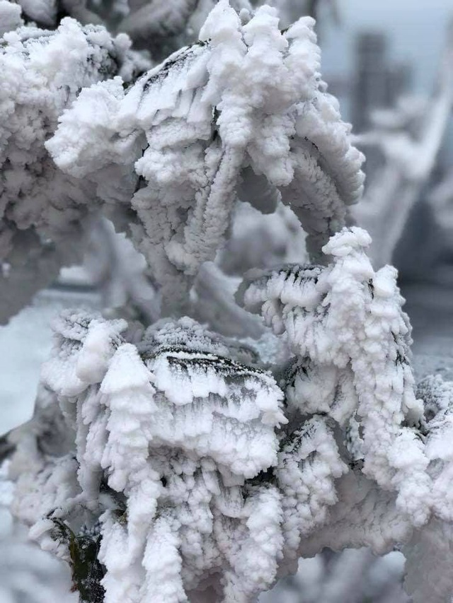 Băng tuyết bất ngờ phủ trắng đỉnh Fansipan - 3