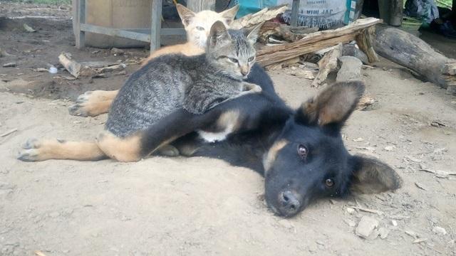 Chó và mèo là 2 đối tượng đang tiềm ẩn nguy cơ bệnh dại trong cộng đồng