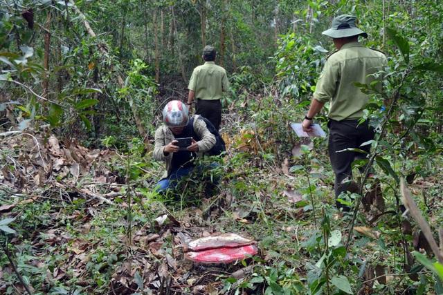 Chuyển hồ sơ để công an điều tra vụ lợi dụng tận thu cây rừng sau bão, nhưng chặt cả những cây không ngã đổ.