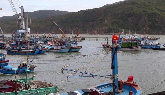Tàu thuyền neo đậu ở cảng Quy Nhơn, trong đó một số tàu thuyền đang neo đậu trên diện tích mặt nước được cấp phép cho Công ty CP Tân Cảng Quy Nhơn.