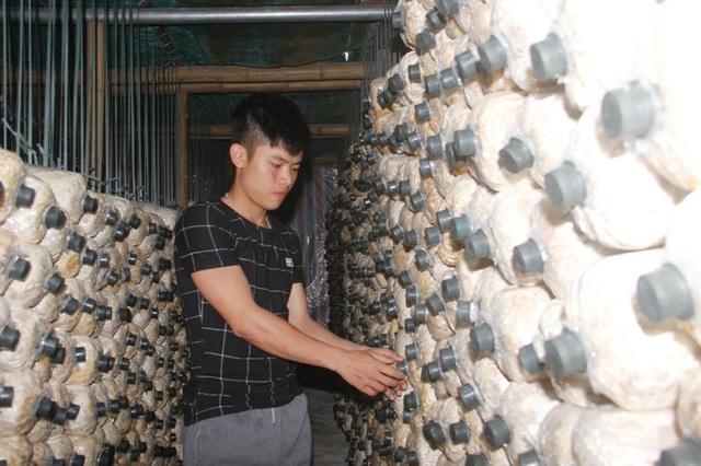Mỗi đợt thu hoạch, trang trại của Phúc đạt khoảng 2 tạ nấm