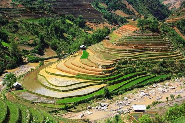 Lúa ở Mù Cang Chải chỉ cấy được 1 vụ/năm.