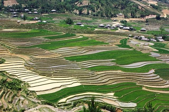 Những thửa ruộng đủ nước đổ ải sẽ được cấy trước, cho tới khi cả cánh đồng chỉ còn một màu xanh tươi.
