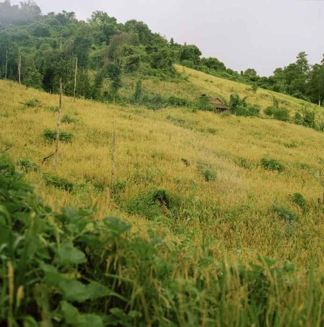 Nơi sinh sống của bộ lạc Kreung, đông bắc Campuchia