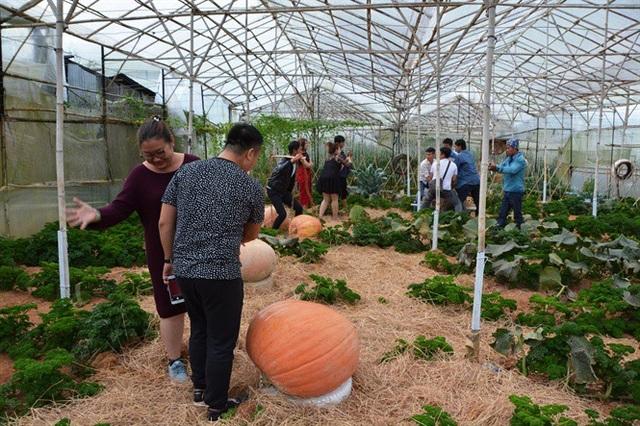 Ngỡ ngàng với vườn bí khổng lồ ở Đà Lạt - 5