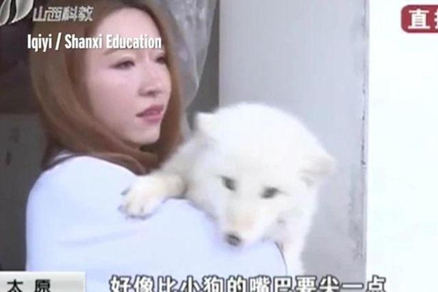 Ban đầu cô Wang cứ nghĩ nó là một chú chó Nhật