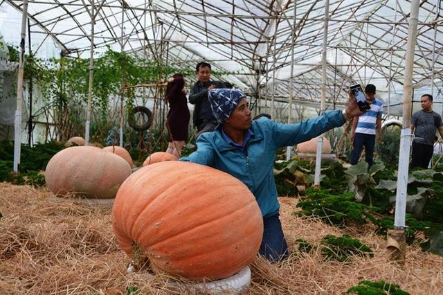 Ngỡ ngàng với vườn bí khổng lồ ở Đà Lạt - 6