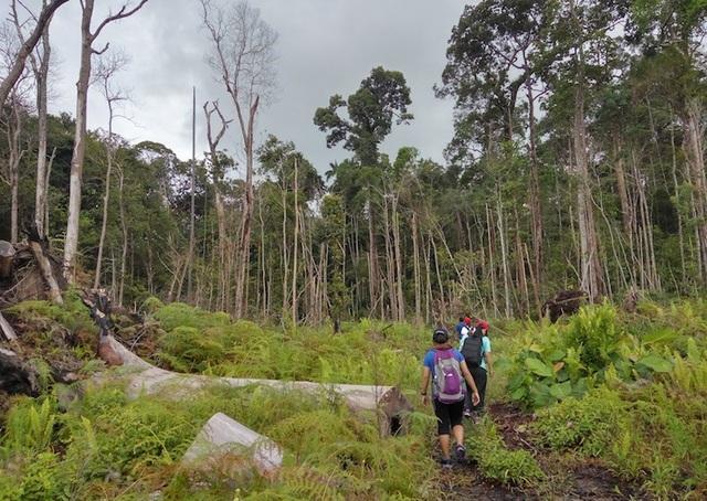 Những công viên quốc gia đẹp nhất Malaysia - 7