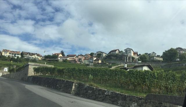 Những ruộng nho quanh các làng.
