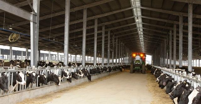 TH là doanh nghiệp sở hữu đàn bò sữa lớn nhất Việt Nam