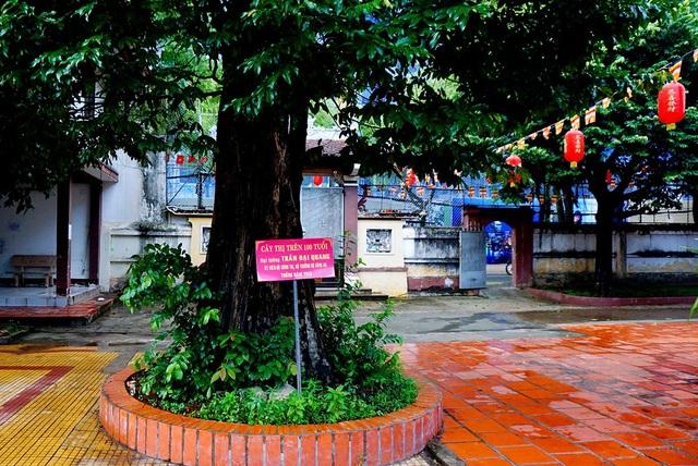 Cây thị được trồng bởi Chủ tịch nước Trần Đại Quang.