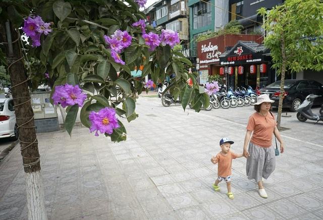 Tán cây và hoa cho nhiều bóng mát trên đường phố.