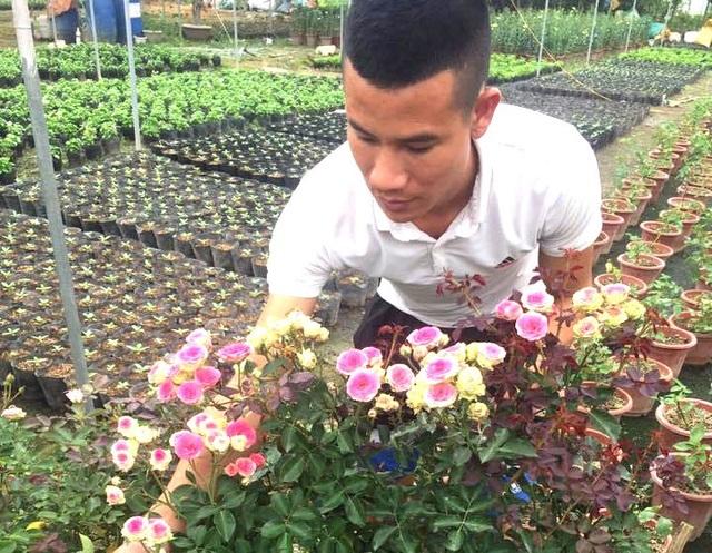 Anh bảo vệ 9X ham trồng hoa hồng, thu 450 triệu đồng/tháng - 1
