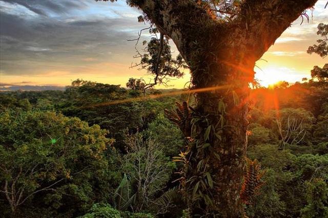 Những khu rừng đẹp nhất thế giới - 2