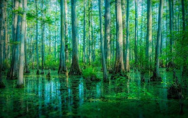 Những khu rừng đẹp nhất thế giới - 3