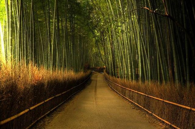 Những khu rừng đẹp nhất thế giới - 4