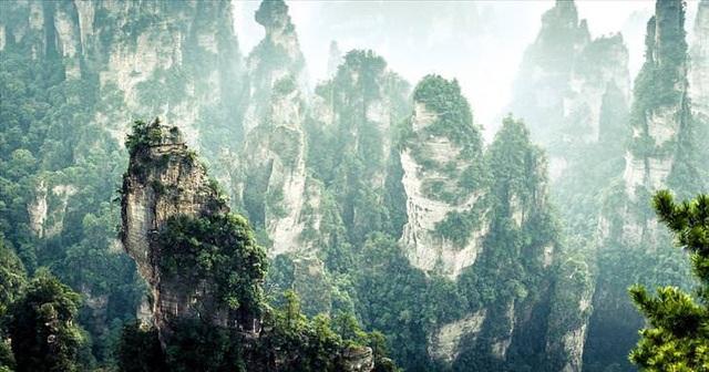 Những khu rừng đẹp nhất thế giới - 5