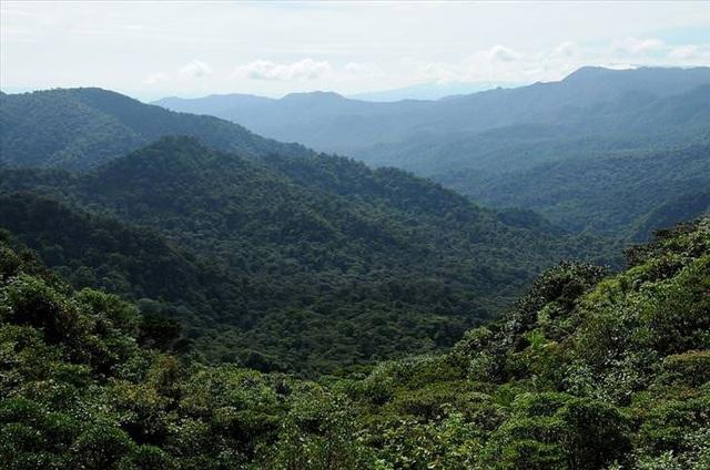 Những khu rừng đẹp nhất thế giới - 6