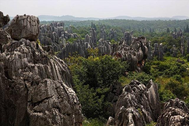 Những khu rừng đẹp nhất thế giới - 8