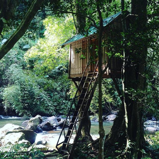 Ngôi nhà nằm giữa những tán cây xanh mát, nhìn ra những con suối nhỏ xinh