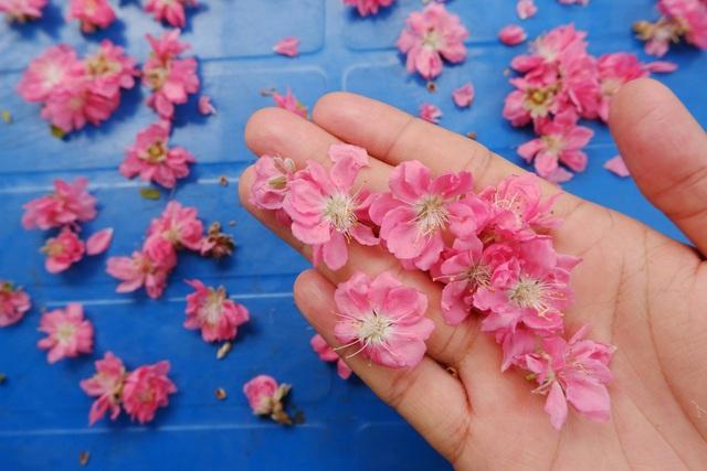Những cánh hoa được chụp bằng giả lập ASTIA trông thật mềm mại.