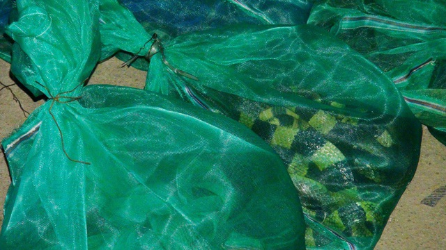 Rắn hổ chúa được phát hiện tại cơ sở của bà Thuận