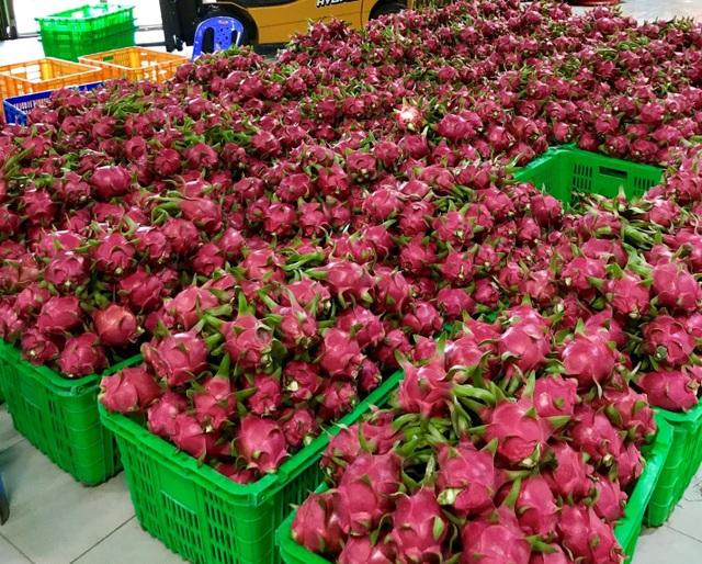 Thanh long vẫn là sản phẩm chủ lực của Việt Nam được MM xuất khẩu sang Thái Lan.