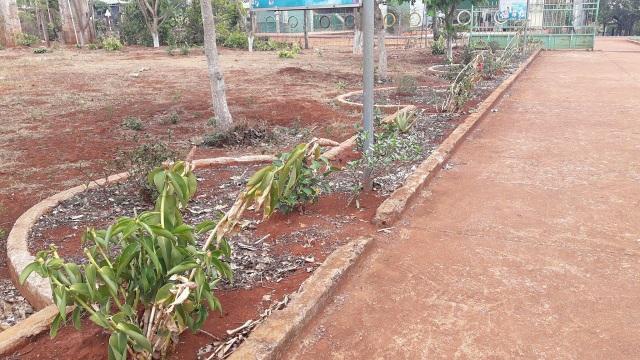 Khuôn viên trường chủ yếu mấy cây tạp.