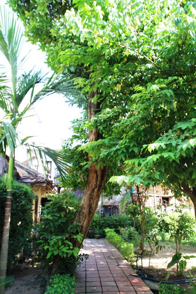 Cây đào cổ có tuổi đời lâu nhất trong vườn nhà
