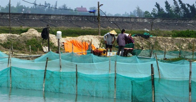 Thăm làng triệu phú ốc hương, doanh thu hơn 18 tỷ đồng/năm - 1