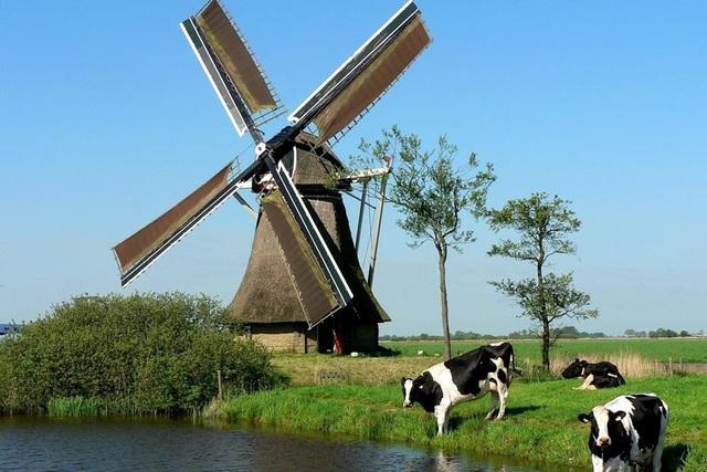 Cối xay gió – biểu tượng của đất nước Hà Lan xinh đẹp