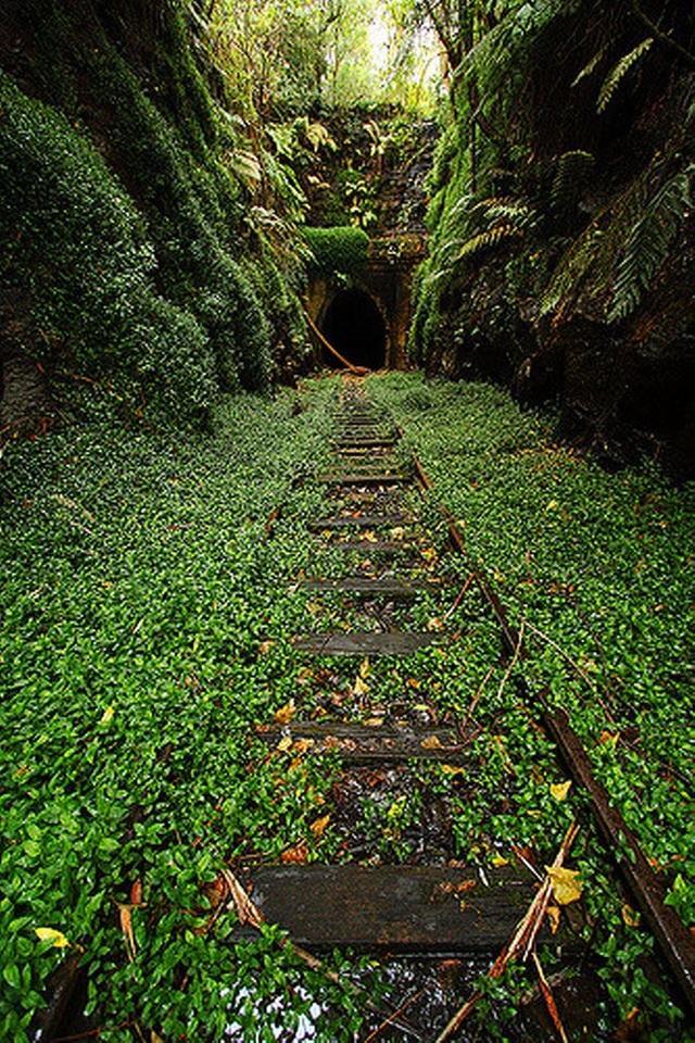 Đường hầm tàu hỏa cũ ở Helensburgh, Scotland, là địa điểm lý tưởng để du khách có thể khám phá một cộng đồng đom đóm nhỏ sống bên trong.
