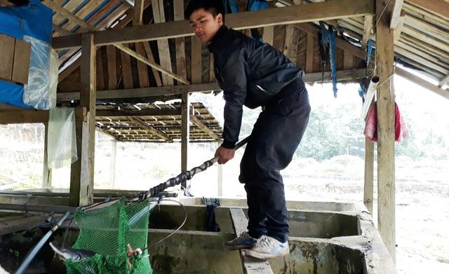 Người nuôi cá tầm ở Măng Đen lao đao vì cá tầm Trung Quốc