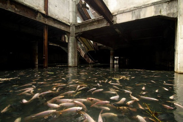 Trung tâm thương mại bỏ hoang ở Thái Lan biến thành hồ cá tự nhiên tuyệt đẹp.