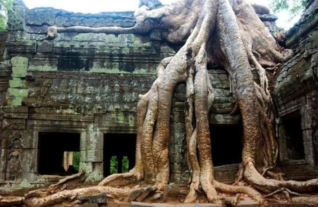 Rễ cây cổ thụ bao phủ kín ngôi đền cổ Ta Prohm ở Angkor, Campuchia.