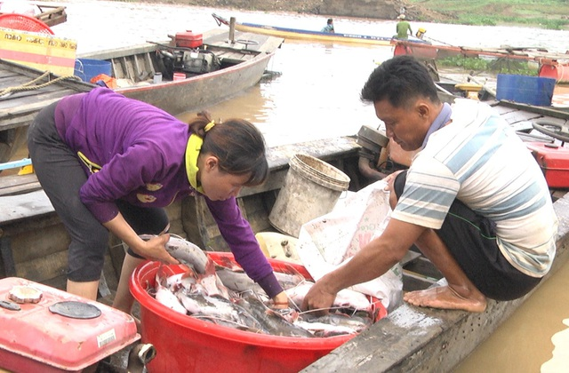 Một hộ nuôi có cá bị chết đem xác cá đi bán cho thương lái