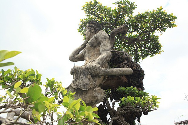 Dưới bàn tay tài hoa của người nghệ nhân Nguyễn Văn Thạo, cây si đá già với những đường chạy mềm dẻo nghệ thuật như sợi tơ hồng kết nối duyên phận từ quá khứ, hiện tại đến tương lai